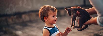 Разходи за отглеждане на куче или котка